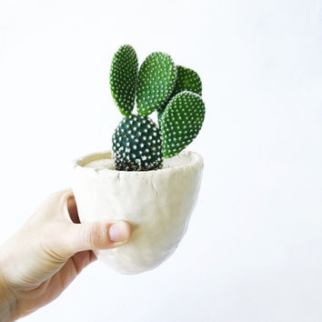Bunny Ear Cactus + White Crackle Cactus Cup Planter - Large