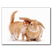 cute_funny_animals_8 kitten bunny rabbit friends