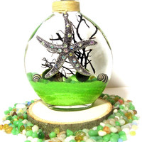 Marimo Terrarium Starfish Zen Garden with Base