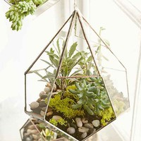 ABJ Glassworks Teardrop Terrarium- Assorted One