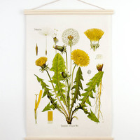 Botanical Dandelion Pull Down Chart Reproduction. Vintage Science Plate Print. Educational Diagram Botany Canvas - CP227CV