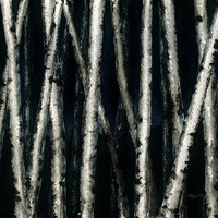 Birch Trees at Night Painting by Anna Bronwyn Foley - Birch Trees at Night Fine Art Prints and Posters for Sale