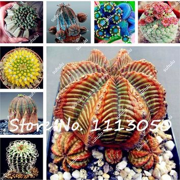 Pebble Plant Mix Cactus Lithops Succulents Living Stones Seeds,DIY Potted Plant, 200 Seeds For Home Garden Free Shipping
