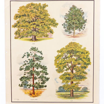 Trees Botanical Print, Vintage School Poster, Home Decor, Macmillans Nature Class Posters, Vintage Print, Picture of Trees, Wall Hanging