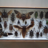 21 Real Mounted Insects Boxed Display Taxidermy Collectable Water Bug Scorpion Beetle Bugs Education Lepidopterology Entomology Cicadicae