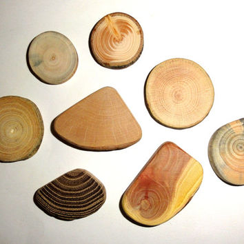 Wood slices 8 pieces. Rustic jewelry supplies tree slice. Weddings, favors, crafts & more - set of 8 blank wood slices for jewelry findings.