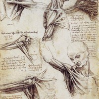 from the scientist's notebook / shoulderandneck1.jpg (JPEG Image, 918x1321 pixels) - Scaled (40%)
