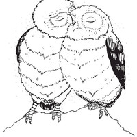 Personal and Commercial Use Owl Illustration