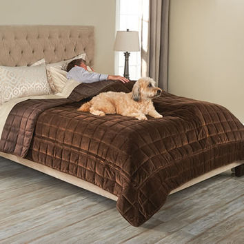 The Bed Protecting Pet Cover - Hammacher Schlemmer
