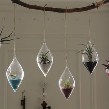 Air Plant Terrarium Kit in Glass Diamond Teardrops