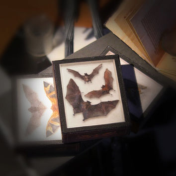 miniature three BATS  SHADOW BOX  - taxidermy - victorian steampunk gothic -  Printable Instant Digital download - Scale 1:12 / 6th