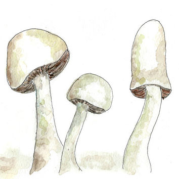 Watercolor painting. Wild mushroom art print. culinary Kitchen decor, neutral, nature, wall art.  gift ideas, spring, summer decor ideas
