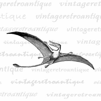 Printable Image Pterodactyl Flying Dinosaur Graphic Digital Download Antique Clip Art Jpg Png Eps  HQ 300dpi No.2707
