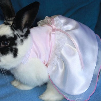 Wedding dress for your bunny rabbit