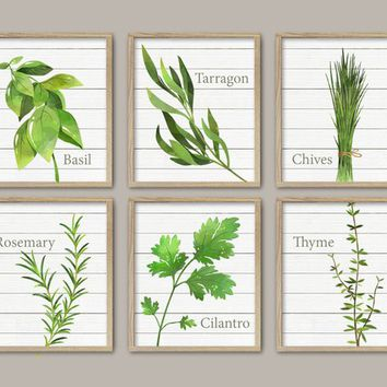 Watercolor HERB Kitchen Wall Art, HERB Leaf Plant Kitchen CANVAS or Print, Herb Collection Dining Room Wall Art, Basil Chives Thyme Set of 6