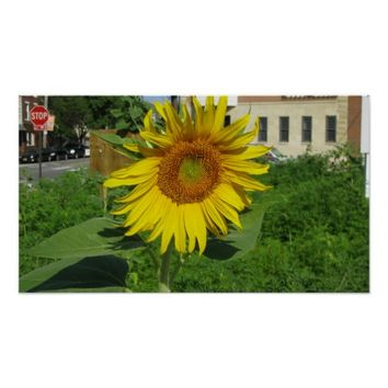 Large Sunflower Poster