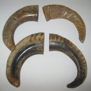 4 Ram horns...E4A60....Natural colored polished sheep horns...........