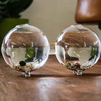Double Terrarium, Handblown Glass Vase