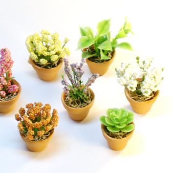 Set of Seven Miniature Plants Fairy Garden Dollhouse Flowers in Clay Pots