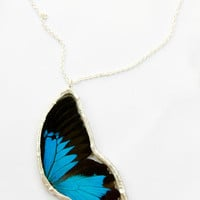 FREE SHIPPING  Whole Side of Real Butterfly Encased in Hand Cut Glass and Soldered Pendant Necklace