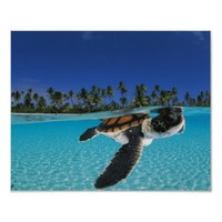 Nengo-nengo Atoll, French Polynesia. Poster from Zazzle.com