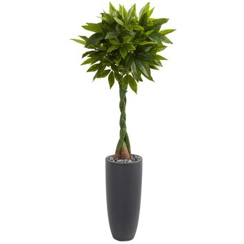 6' Money Artificial Tree in Gray Cylinder Planter (Real Touch)