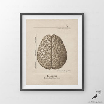 Anatomy Print, Human Brain, Vintage Illustration, Human Anatomical Wall Art, Vintage Inspired Medical illustration
