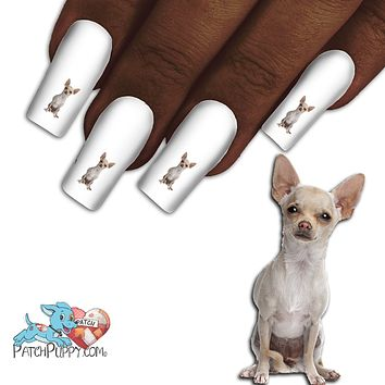 Chihuahua Tan and White Nail Art Decals (NOW 50% MORE FREE)