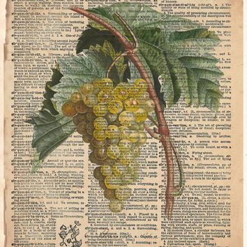 White Grape art, old botanical illustration, nature artwork print on dictionary page