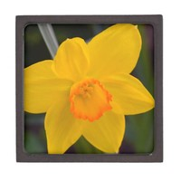 Spring Yellow Daffodil Flower Design Premium Trinket Box