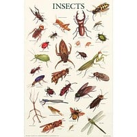 Insects Education Poster 21x33