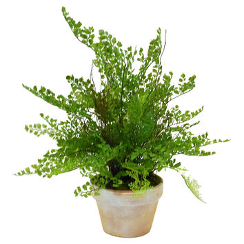 "19"" Maidenhair in Terracotta Pot, Faux, Arrangements"