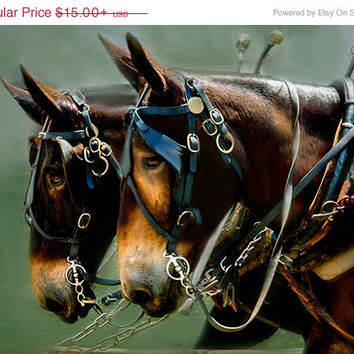 sale~Brown mules, draft animal, mule team, Appalachian Trail Ride, 5x7 Photo Decor for animal lover, Country Western Gift