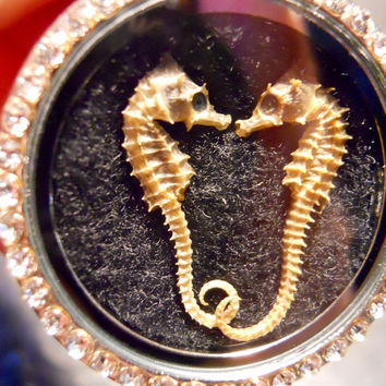 Rhinestone Sparkle Kissy Face Double Seahorse Preserved Specimen Taxidermy Necklace