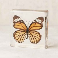 Butterfly Decor Sculpture
