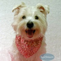 Hearts and Stars Dog Bandana, Pink or Blue