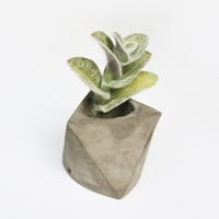 Concrete mini planter - Gray Cement