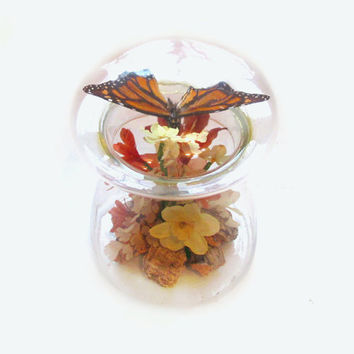 Vintage Preserved Butterfly, Glass Mushroom Display Case / Terrarium