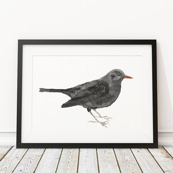Blackbird poster Cute bird watercolor print Nursery art ACW84