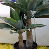 "Coco's Plantation 30"" Agave Plant in Pot"