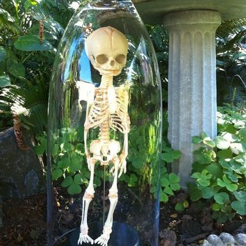 30 week old Human Fetal Skelton in glass Cloche Dome by Lucyguy