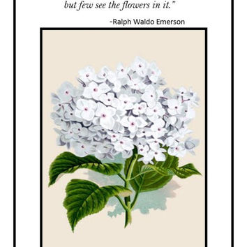 Home office art, floral printable, white hydrangea, download, Ralph Waldo Emerson quote, flower art prints, nature art, apartment wall decor