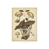 Antique Mushrooms II