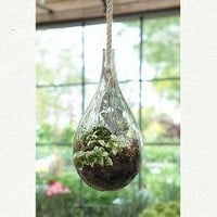 Hanging Drop Terrarium