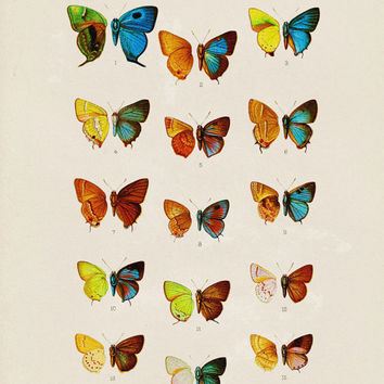 Antique Butterflies Illustration - Colorful Butterfly Image, Vintage Graphic, Animal Poster - Digital Graphics, INSTANT DOWNLOAD