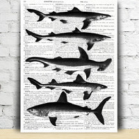 Sharks print Nautical poster Fish art Beach house decor TO373-B