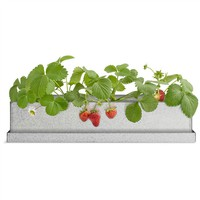 Windowsill Recycled Steel Grow Box - Strawberry (491565375), Organic Garden Plants, Herb Garden & Terrariums | bambeco