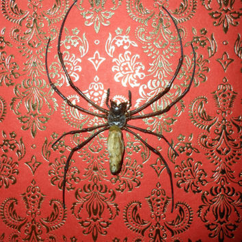 Golden orb weaver spider (Nephila pilipes) mounted in a real wood  shadow box frame