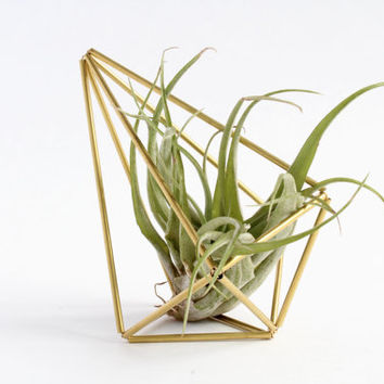 Mini Himmeli Air Plant Holder | Wedding Table Decor