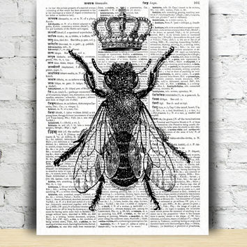 Queen bee poster Dictionary art decor Insect print